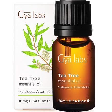 Gya Labs Tea Tree Essential Oil for Skin Care & Hair Care